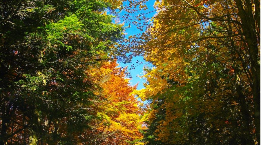Picture of a group of trees in the fall. The leaves are green, orange and yellow in Hendersonville, TN